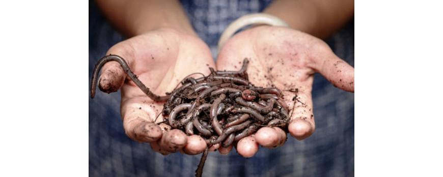 Žížaly jako nebezpečná konkurence v odpadovém hospodářství